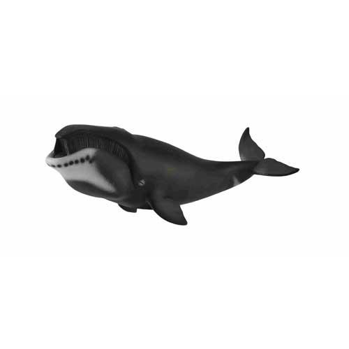 88652 Collecta【ホッキョククジラ】