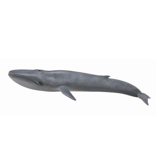88834 Collecta【シロナガスクジラ 】
