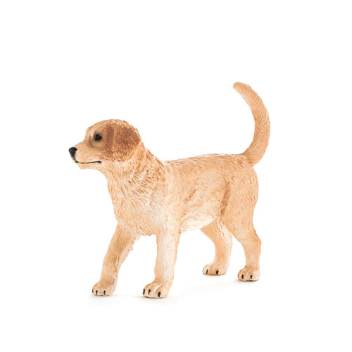 387205 mojo【ゴールデンレトリーバー(子犬)】