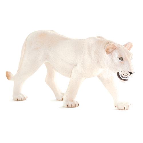 387207 mojo【ホワイトライオン(メス)】