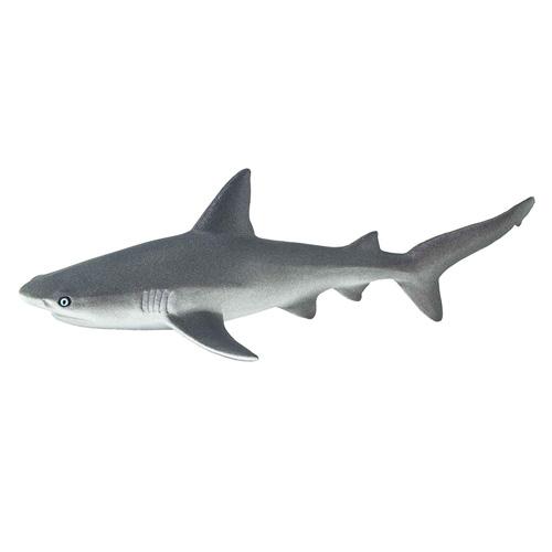 100099 Safari【オグロメジロザメ】