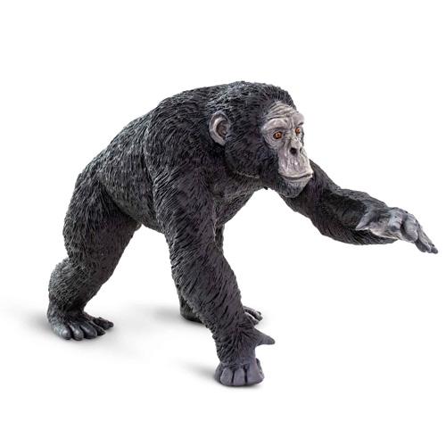 100302 Safari【WWチンパンジー】
