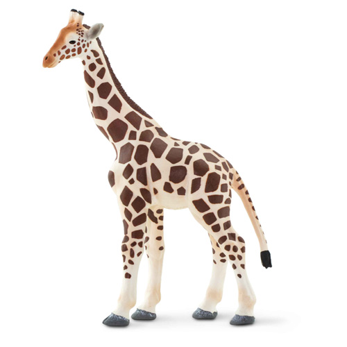 100421 Safari【キリンB(親)】