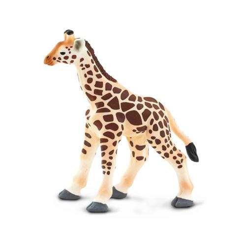 100422 Safari【キリンB(仔)】