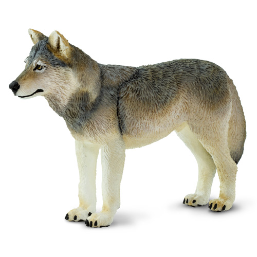 100509 Safari【タイリクオオカミ】