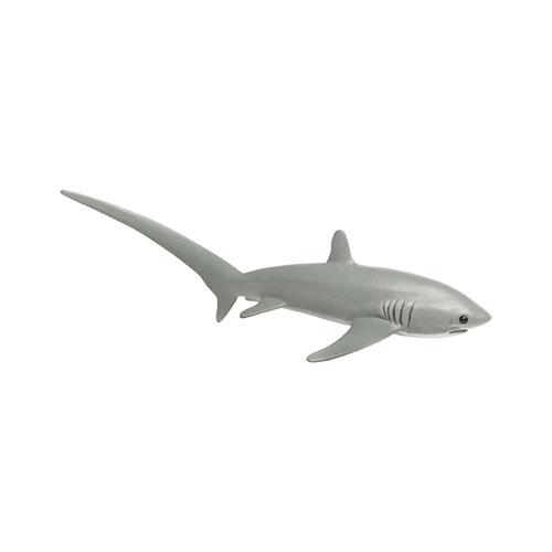 200229 Safari【オナガザメ】