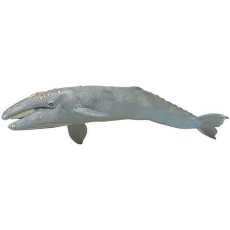 210402 Safari【MBコククジラ(親)】