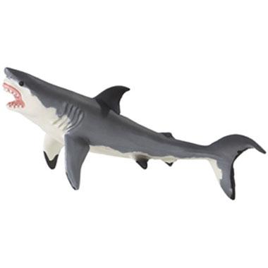 211202 Safari【MBホホジロザメ】
