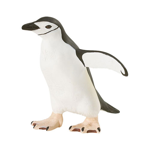 220429 Safari【アゴヒゲペンギン】