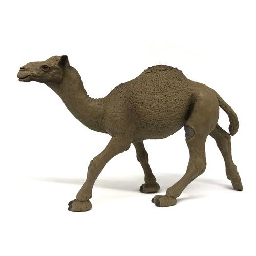 222429 Safari【ヒトコブラクダ】