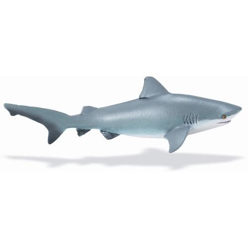 422429 Safari【オオメジロザメ】
